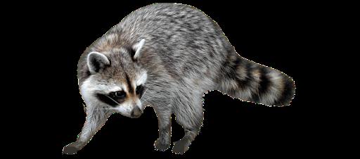 San Antonio Wildlife Removal